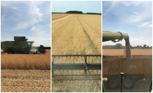 Goodley Harvest collage
